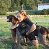 Finale des chiens d'or 2012 à Izeaux