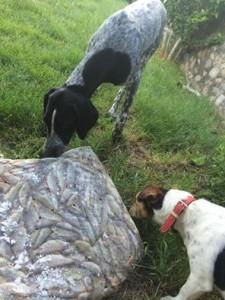 17 juin poisson pour chien