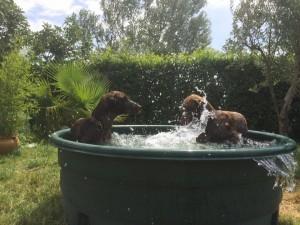 5 juillet bac à eau